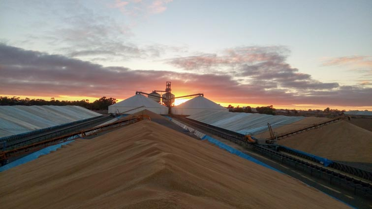 Welbungin, Wheat Belt, Tarping, Grain covering