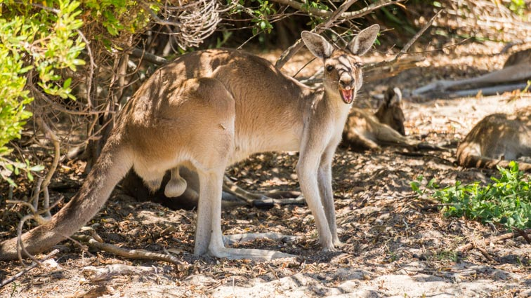 yanchep national park west-australië
