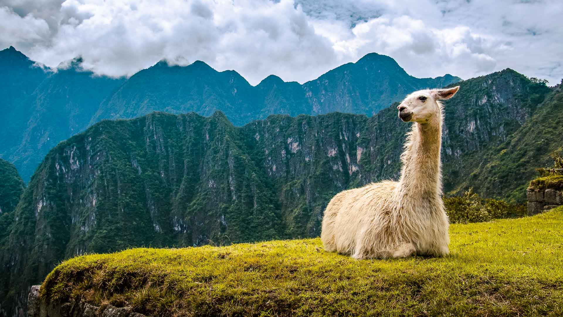 Kosten Backpacken Peru. Alpacca